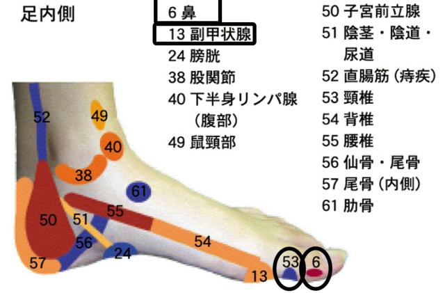 官足法 花粉症・鼻炎治療 反射区