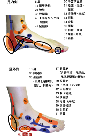 反射区図表 脊椎と膝関節